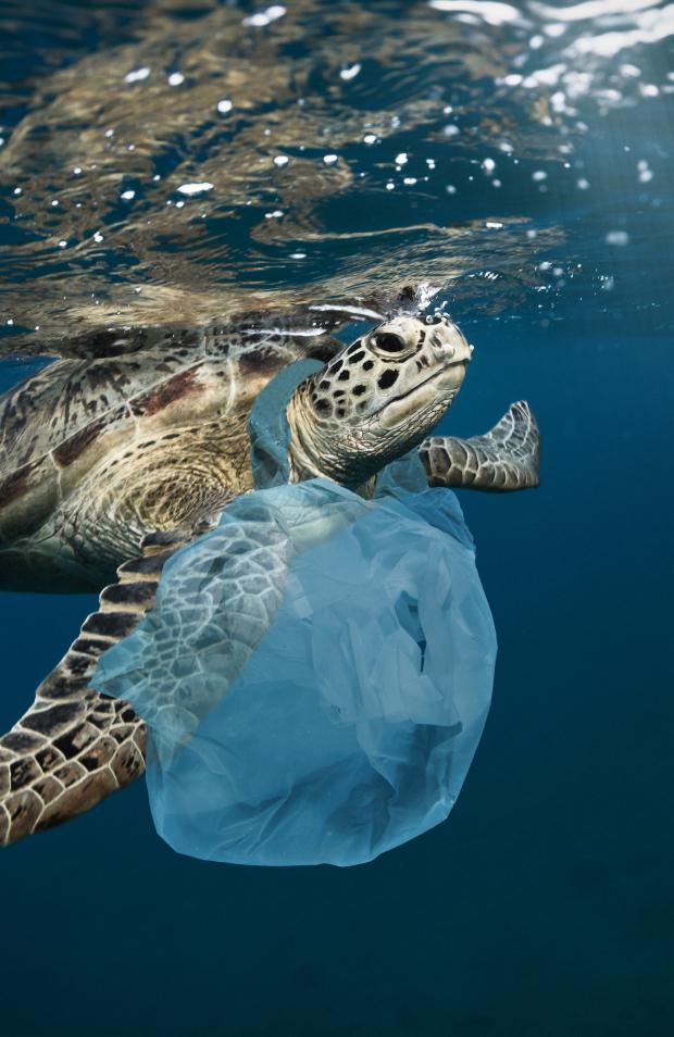 The Sea Cleaners Manta: 1.400 deniz canlısı plastik atıklar sebebiyle etkilendi.